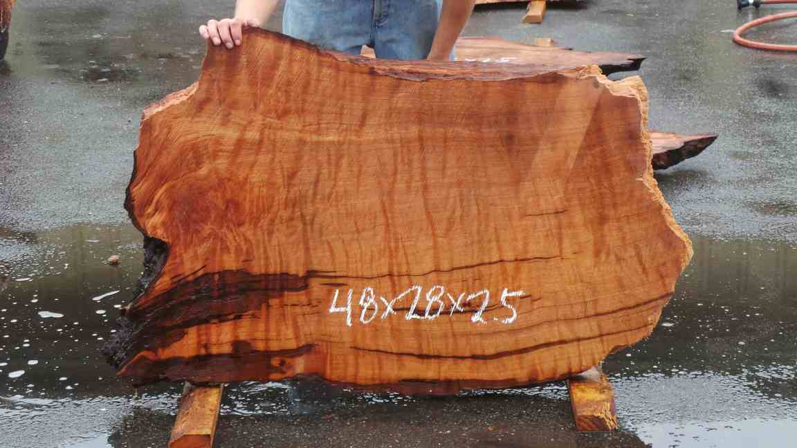 Contrasted Redwood Burl Slab with Curl Pattern