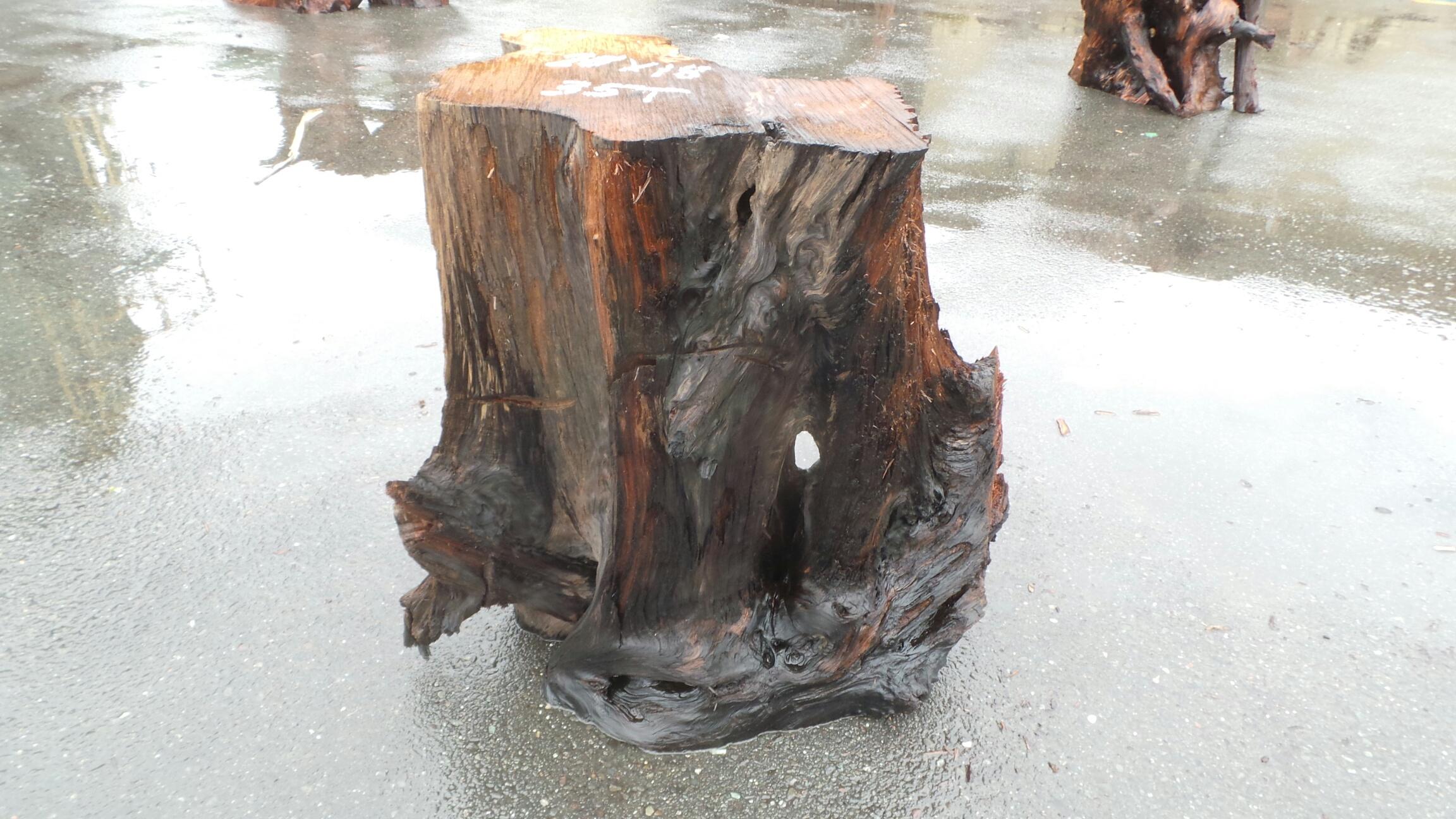 Redwood Base - See Through Tree Trunk