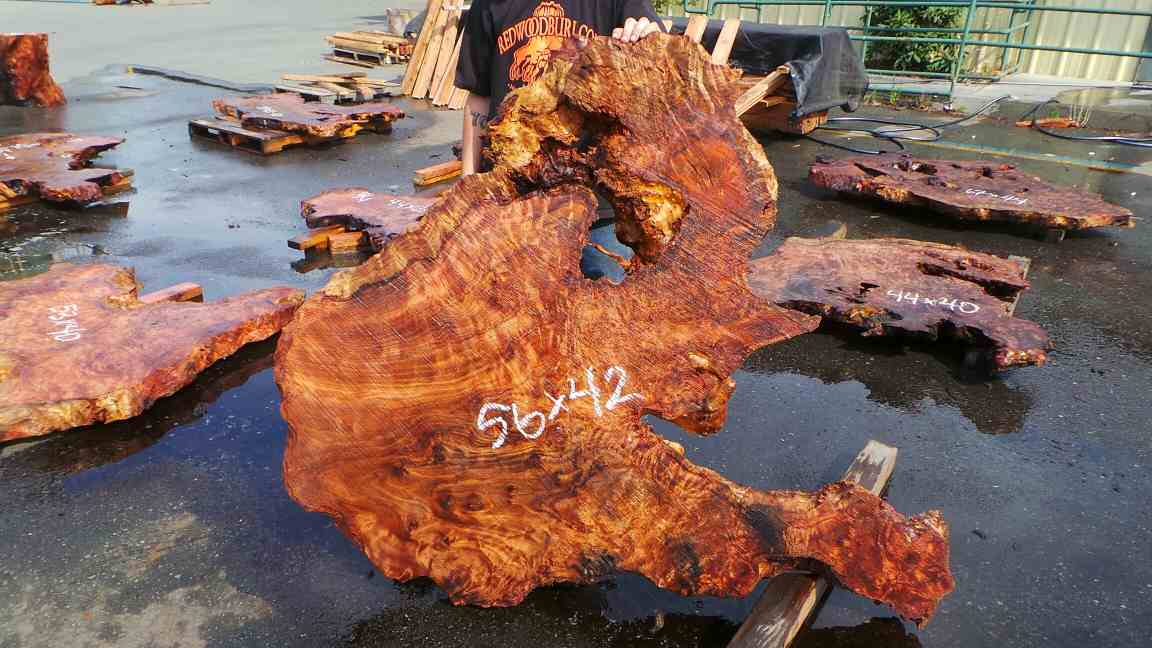 Highly figured live edge redwood burl slab