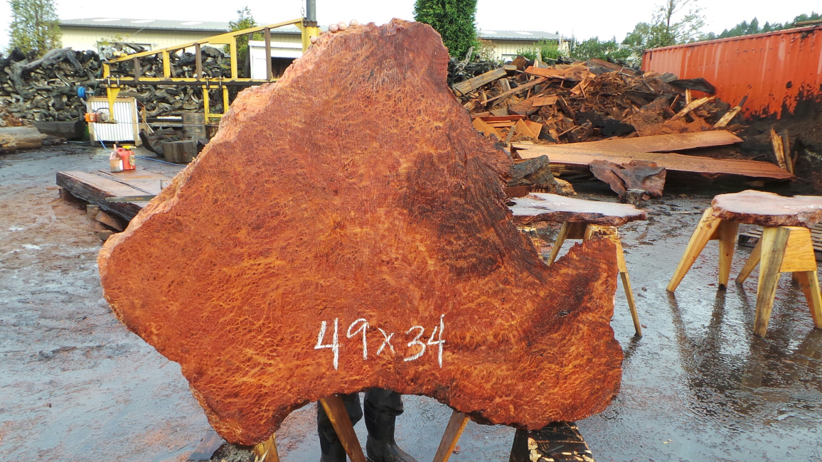Burl wood slab for sale