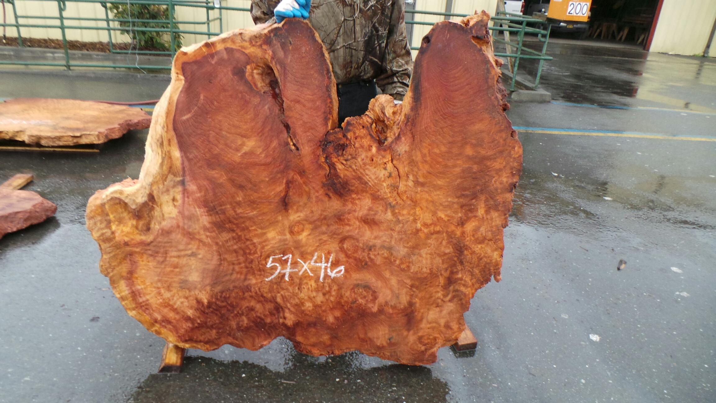 Redwood Burl Slab Table Top or Figured Wood Blank