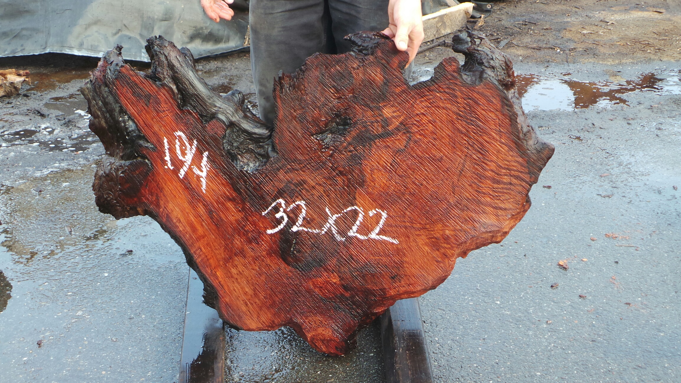 Redwood Live Edge Burl Slabs - Unique Wood