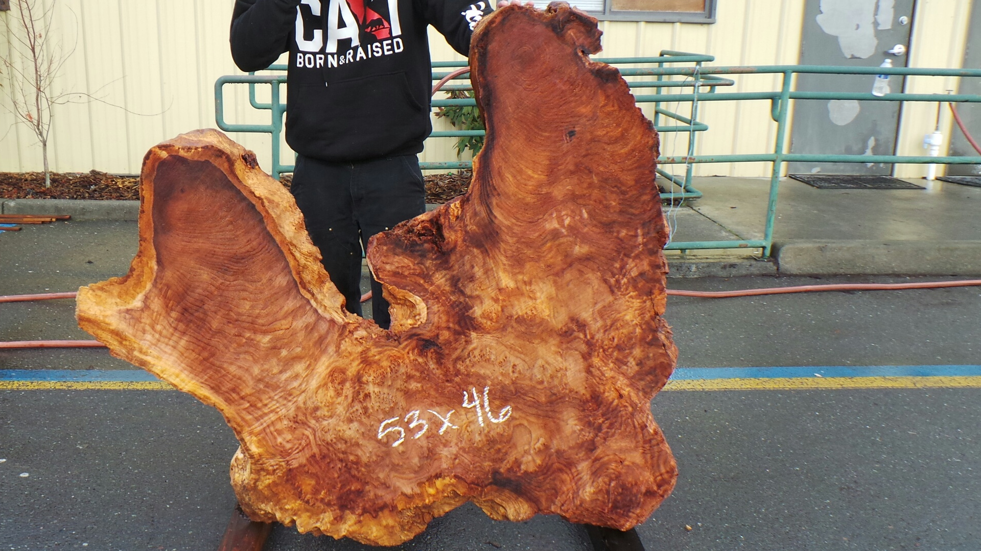 Wild Redwood Burl - Fit for Burl Table Top or Wall Art