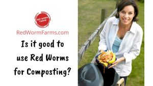 Is It Good To Use Red Worms For Composting? - redwormfarms.com