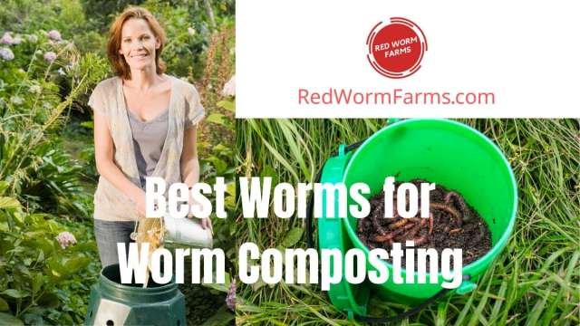 Best Worms for Worm Composting - redwormfarms.com