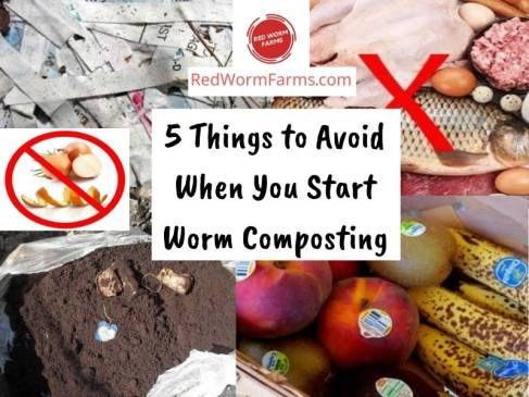 5 Things to Avoid When You Start Worm Composting - redwormfarms.com