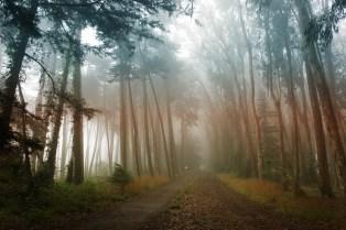 Morning Mist at Presidio