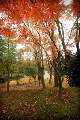 Fall Colors at Kenrokuen Gardens