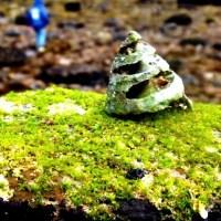 The Rock platform - Sea grass, algae & anemones