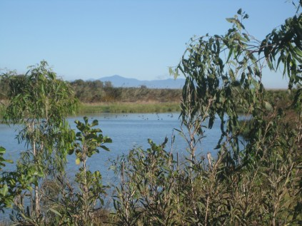 the beauty of a cane field lagoon