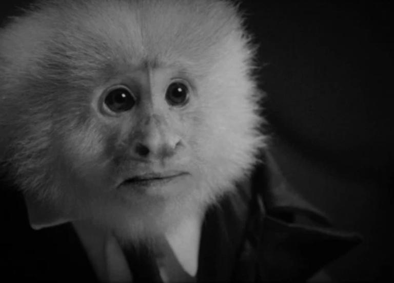 David Lynch interrogates monkey in new Netflix short