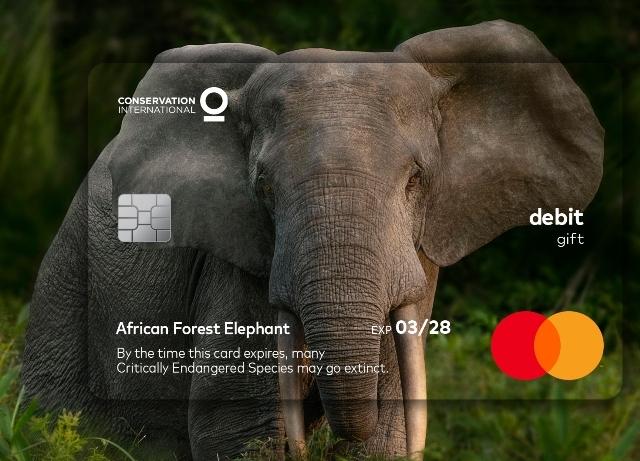 Mastercard: Expiration date highlights wildlife timeframe