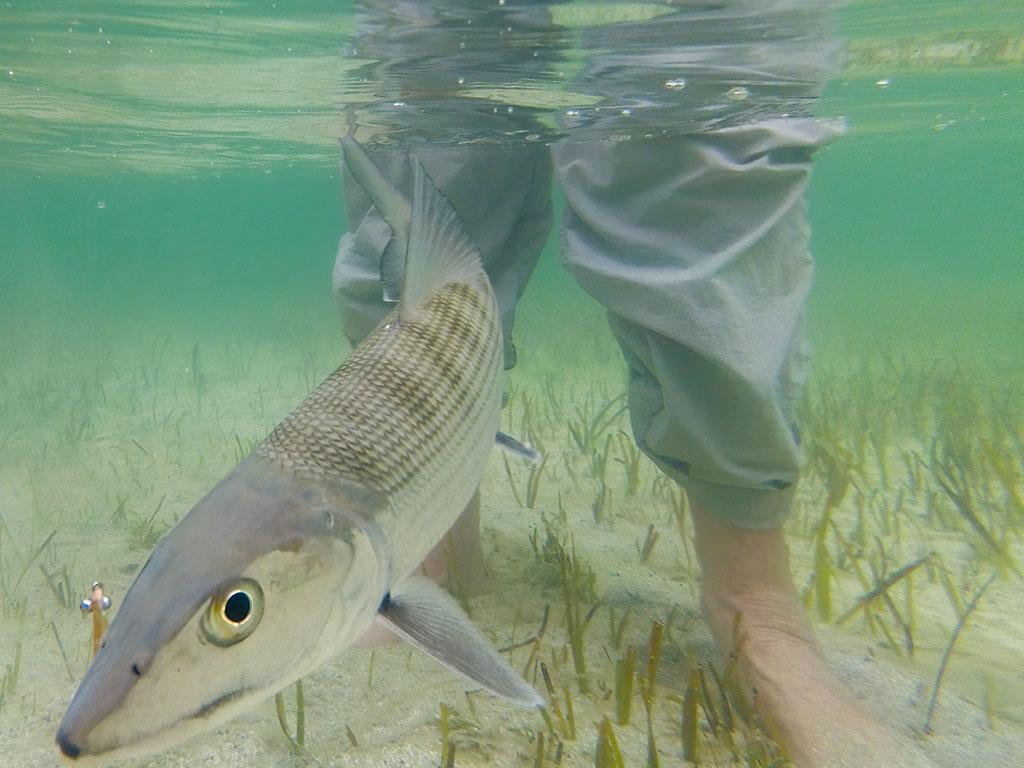 Reel Belize Bonefish saltwater fly fishing. Reel Women saltwater fly fishing.