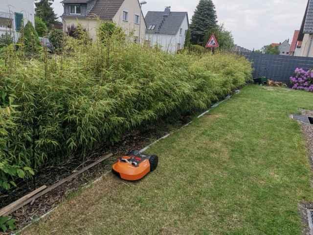 Bambus Hecke Pflanzen Meine Erfahrungen Reens Blog De