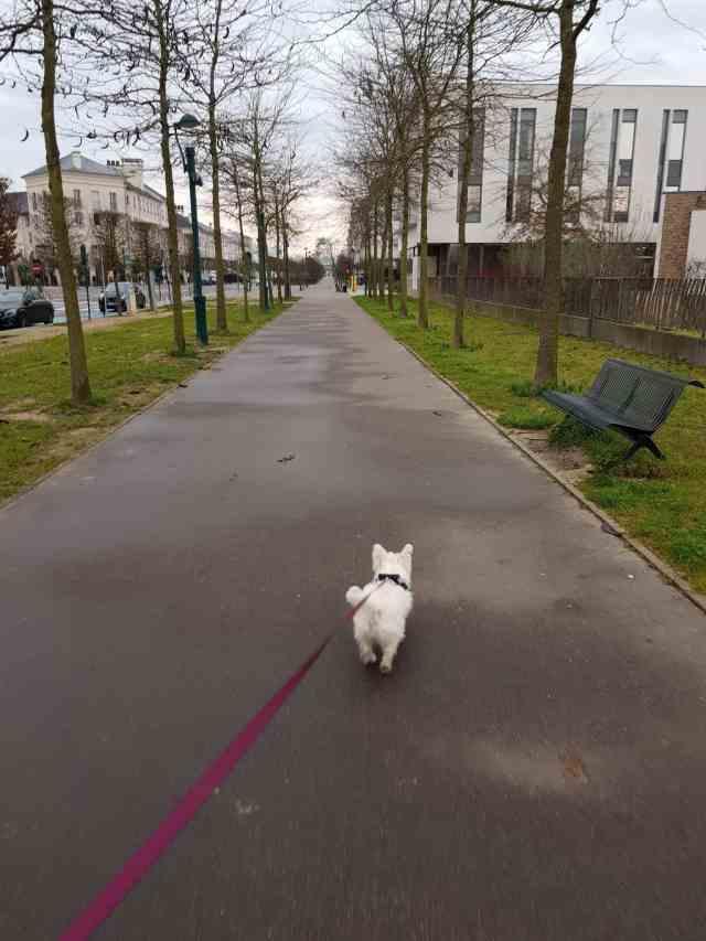 Disneyland Paris mit Hund Serris hundefreundliche Hotels disney