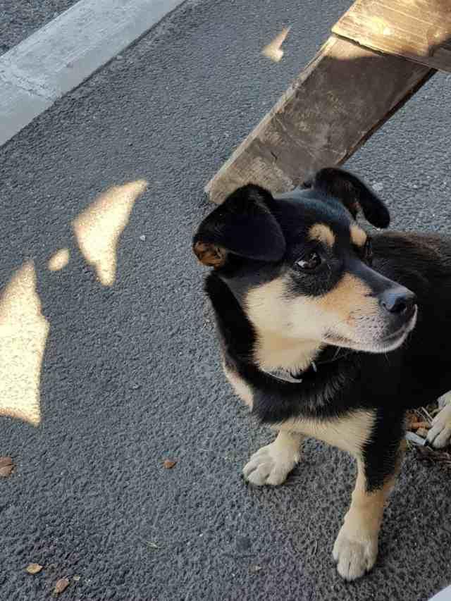 Von Brasov nach Bran Strassenhund