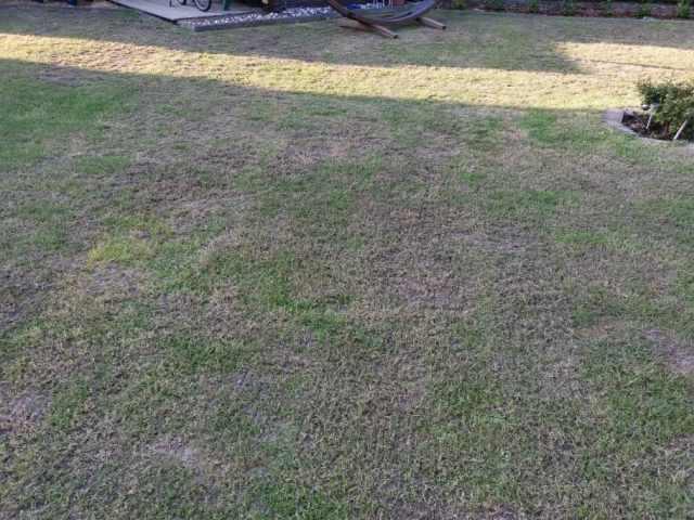 Frühlingskur für den Rasen