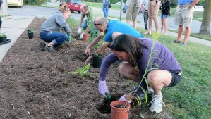 Workshop particpants plant the rain garden at Hazelglen Drive