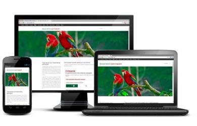 Assurance Perroquet: site sur les assurances pour perroquet