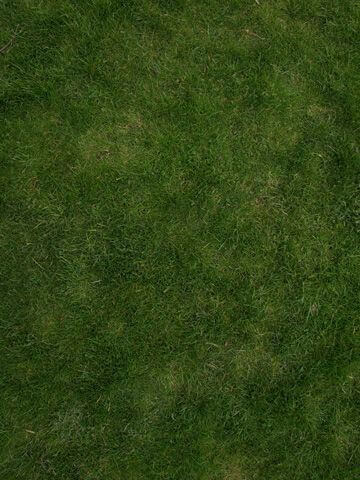 grass.jpg?fit=360%2C480&ssl=1