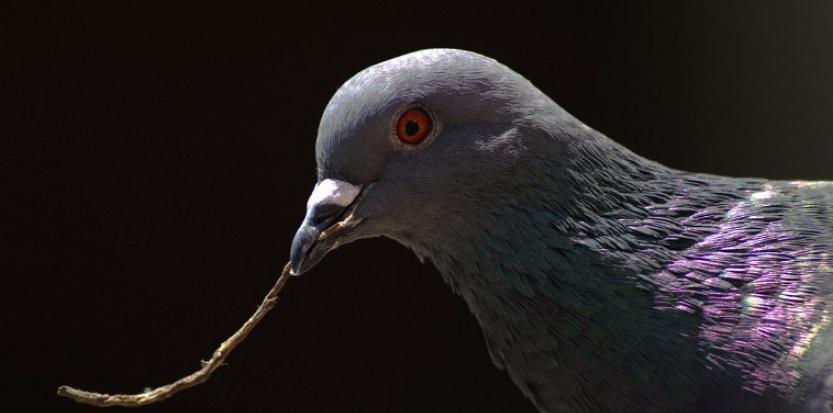 Les pigeons ont classé 128 photographies en 16 catégories différentes.  CHRISTIAN DÉCOUT / BIOSPHOTO/AFP