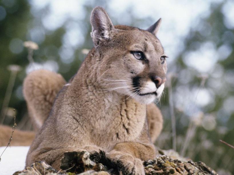 8a4ef97b03622 Le Puma