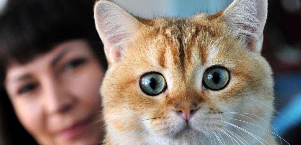 Le paracétamol est le le médicament le plus dangereux pour le chat. © VYACHESLAV OSELEDKO / AFP