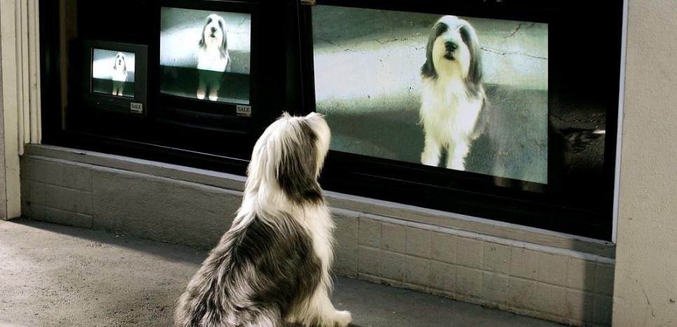 Les chiens voient des images qui clignotent rapidement, ce qui peut les désintéresser. ©Kobal / The Picture Desk / AFP