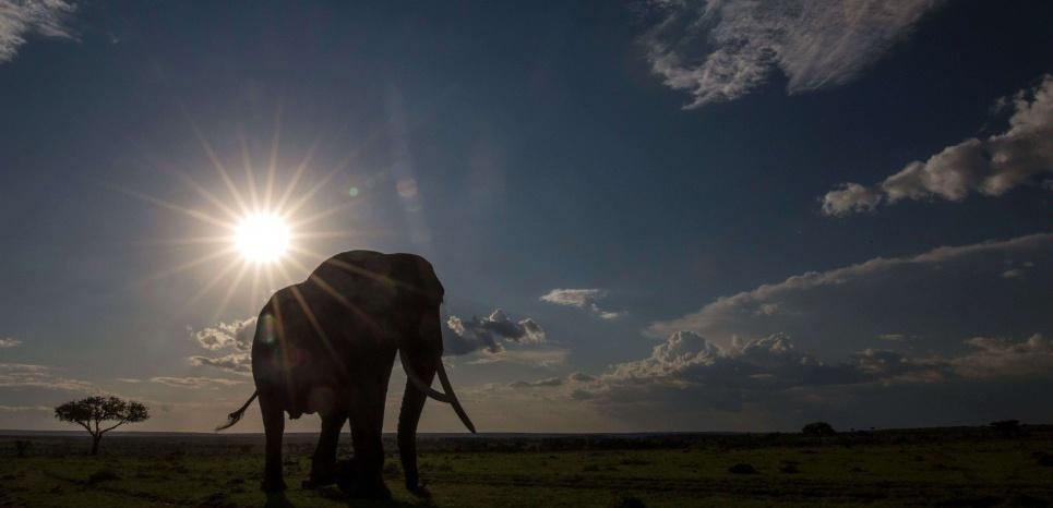 Les éléphants sont capables d'entendre les infrasons produits par les intempéries. © Exodus/REX Shutterstock/SIPA