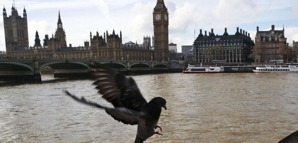 Comme à Paris, les pigeons bisets sont nombreux à Londres. Grâce à Plume Labs, certains sont plus utiles que d'autres. © Lefteris Pitarakis/AP/SIPA
