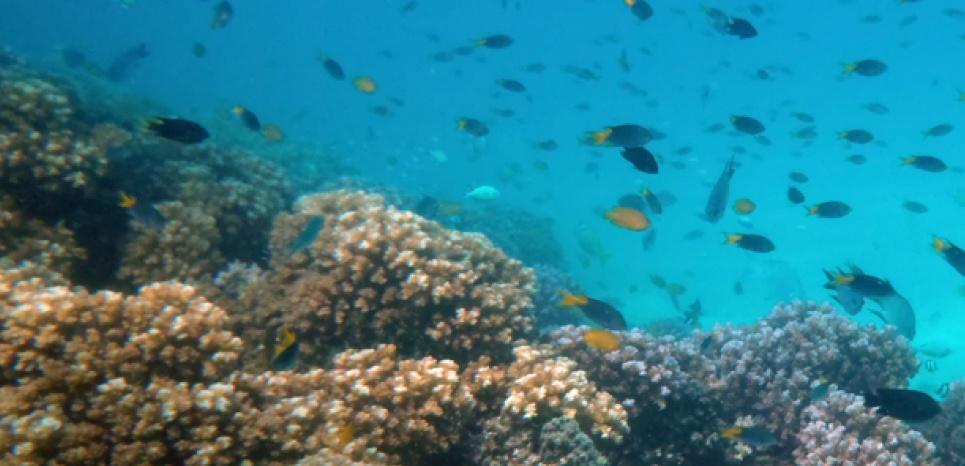 Récif corallien, dans la Grande Barrière de corail (Lizard Island). © Oona M. Lönnstedt.