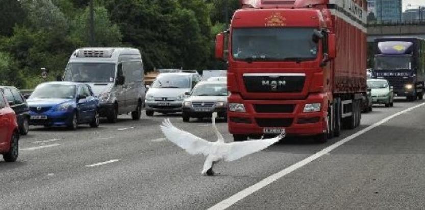 https://i2.wp.com/referentiel.nouvelobs.com/file/6258741-les-oiseaux-se-familiarisent-avec-les-limitations-de-vitesse.jpg