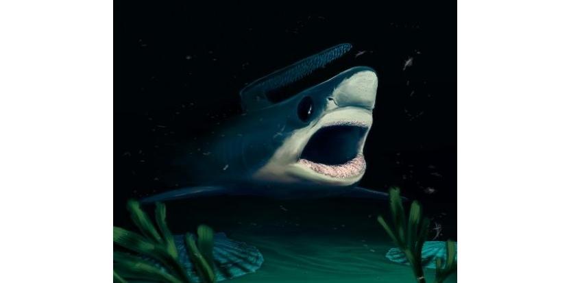 Une lignée de requins qu'on croyait disparue lors de l'extinction massive du Permien, il y a 250 millions d'années, vivait encore 120 millions d'années plus tard, à l'époque du Crétacé, si l'on en croit de minuscules dents fossiles retrouvées dans le sud de la France.(c) Afp