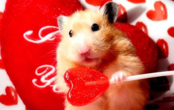 Pourquoi Le Hamster Tourne Dans Sa Roue Le Plus