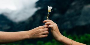 A hand that gives a small withe flower to another hand