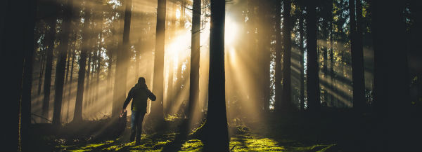 Silhouette of a person walking upwards though a forest toward the sun