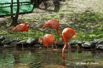 Pink/Orange Flamingos