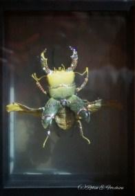 Jewelery encrusted beetle