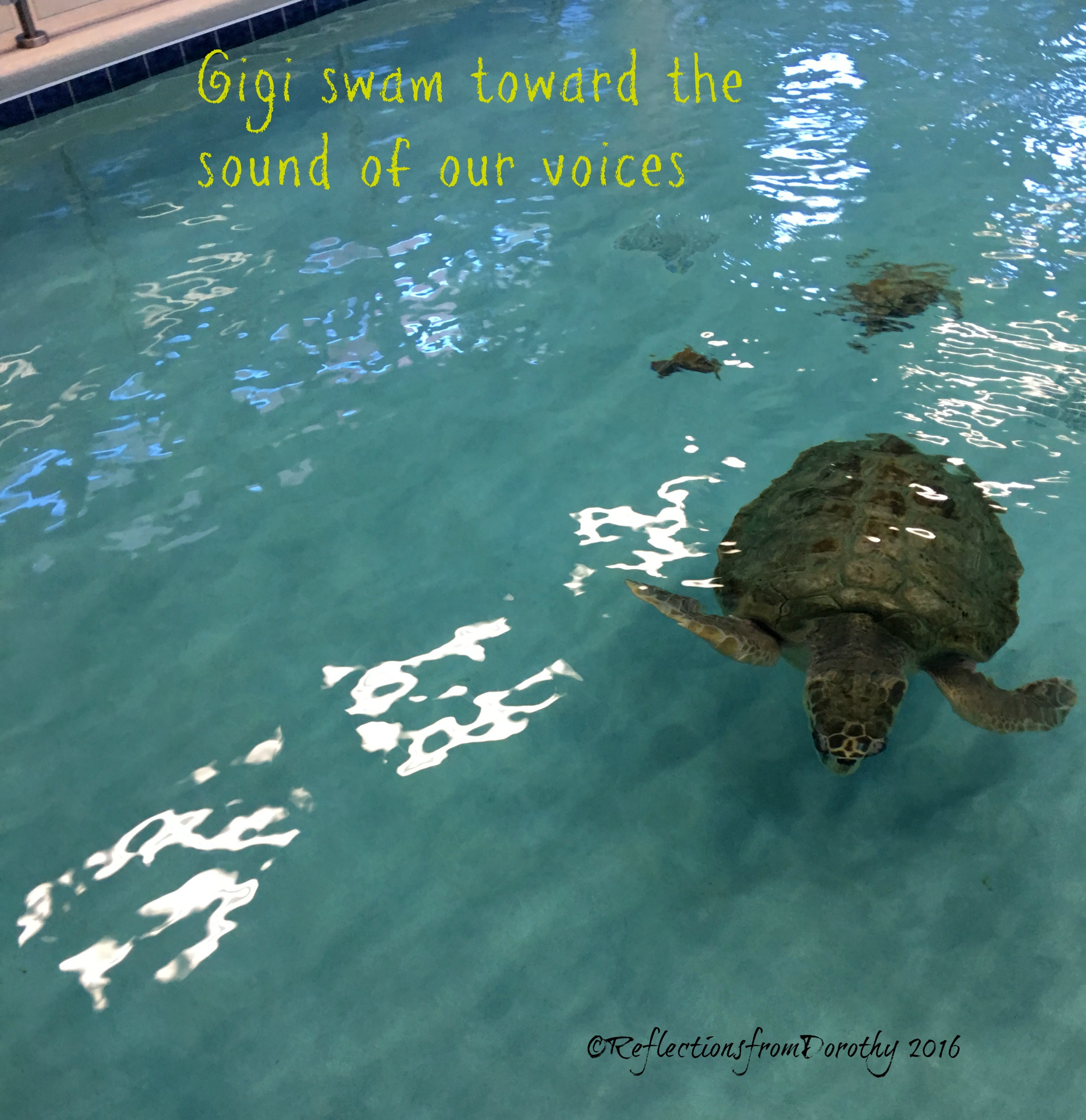 Ten Facts About Loggerhead Sea Turtles Reflections From