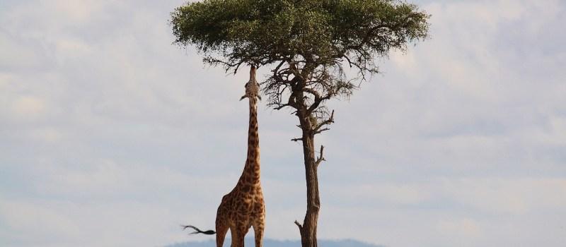 Perks Of Being A Tall Girl – Mrinalini Jindal