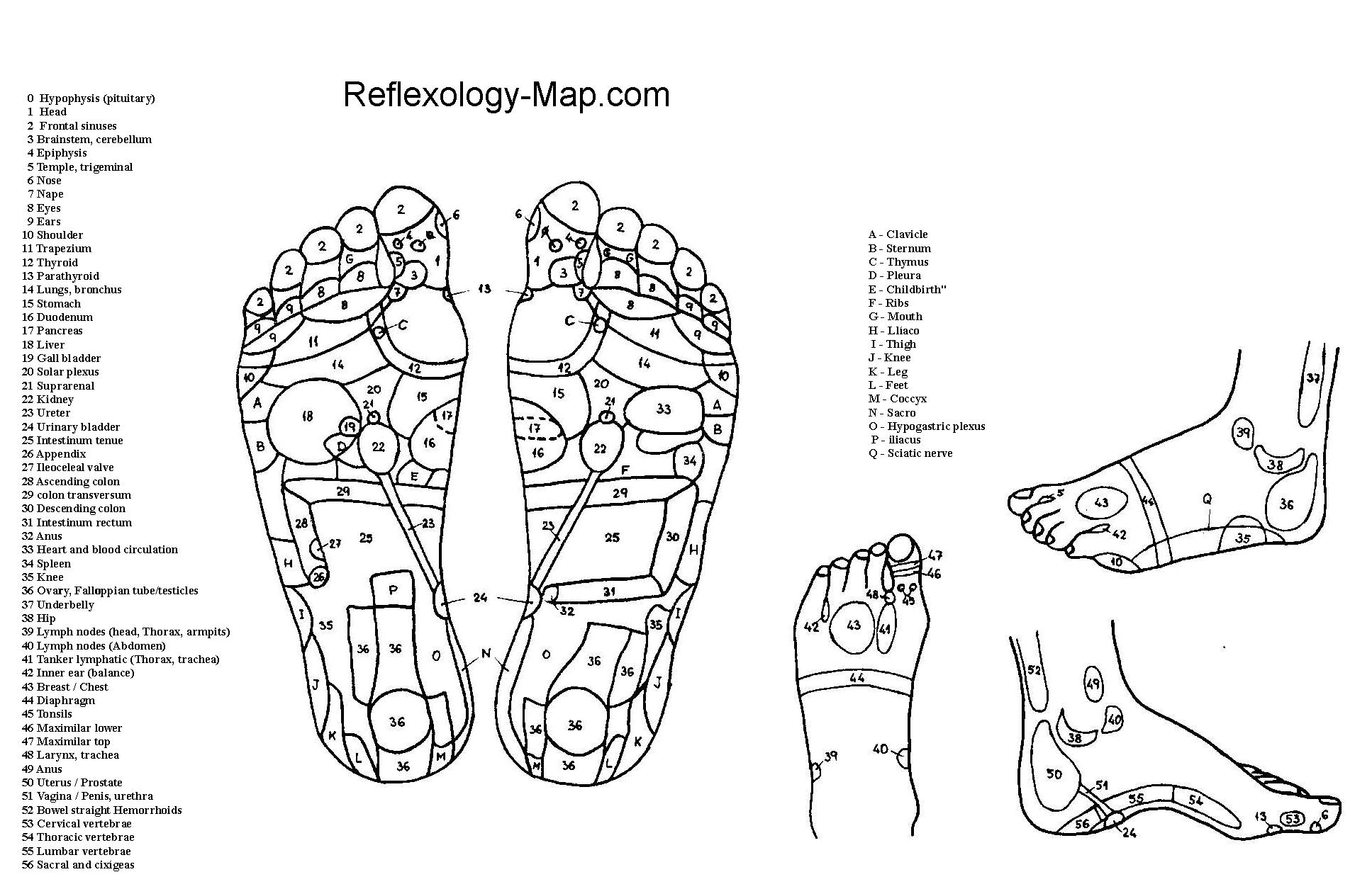 Download All Best Foot Reflexology Charts