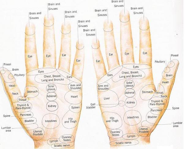 Hand Reflexology Map ▷ Pressure Points: How to Apply 🥇 Hand Reflexology