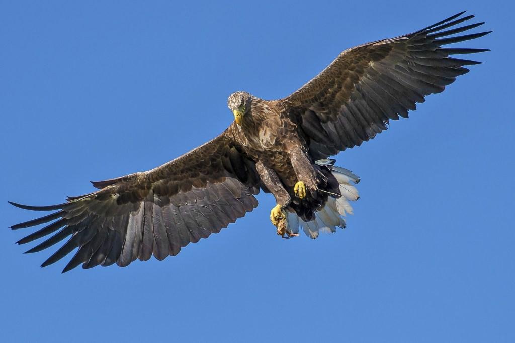 tel l'aigle, gardez les yeux ouverts pour booster votre performance commerciale