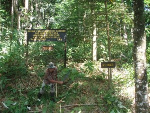 """The sign reads """"A Forest to Fix Carbon"""""""