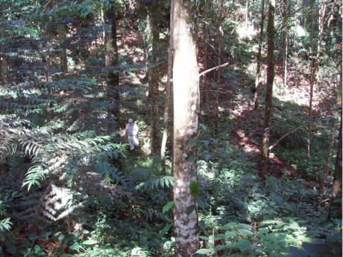A photograph of the Connecticut College Forest in February 2009 showing a diversity of tree species.