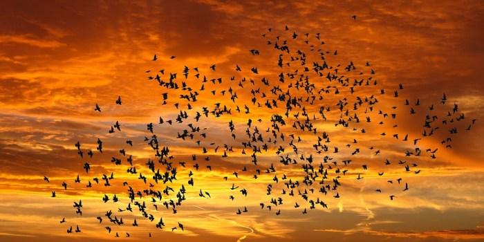 birds god's glory purpose