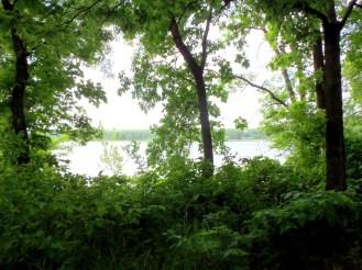 Tree Windows to the Lake