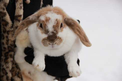 Bunny Farm Animals
