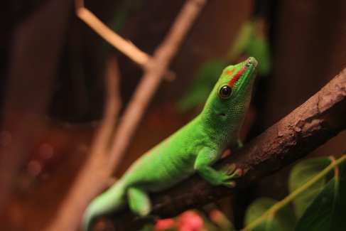 Day Gecko_Nature Center_Nature