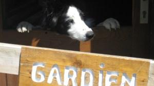 chien gardien
